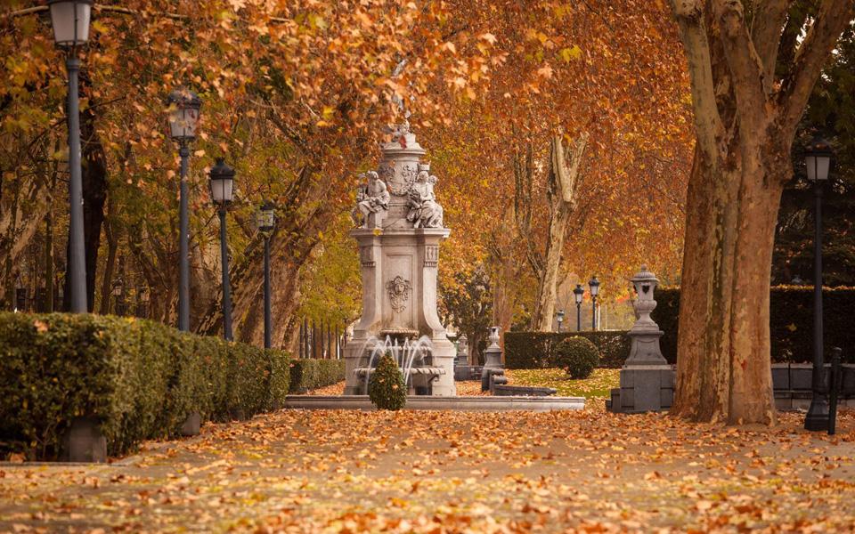 Parque con hojas secas